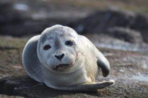 Seal North Beach Chatham MA Cape Cod Beach Get-Away